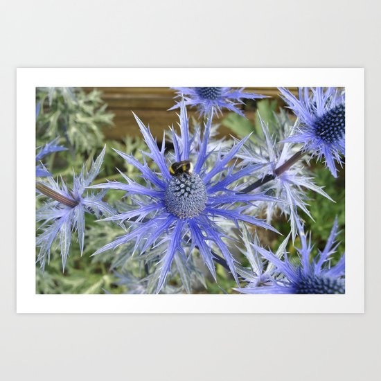 the sea holly Art Print