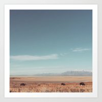 bison Art Prints featuring Bison by Joe Young