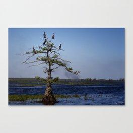 Cormorant Tree Canvas Print