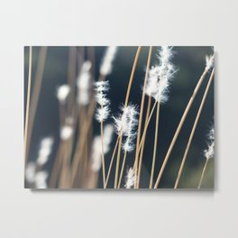Flowers in the sunlight Metal Print