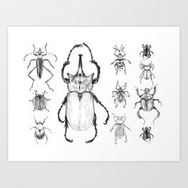 Beetle Collection Art Print