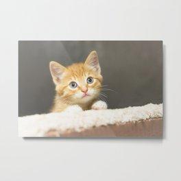 Ginger kitten playing in a box Metal Print