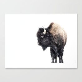 Bison Standing in a Snowstorm Canvas Print