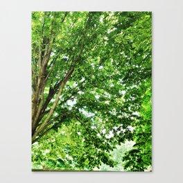 Pretty Trees in Arlington Canvas Print