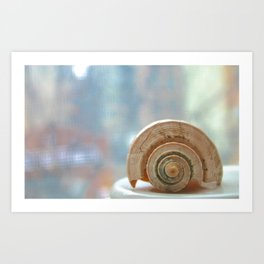 Shell Up Close and Personal Art Print