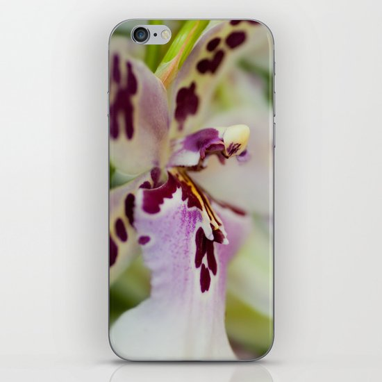 Orchid Cambria 8022 iPhone & iPod Skin