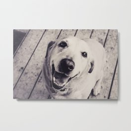 The Perfect Lab Metal Print