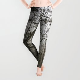 Frosty Forest Path Leggings