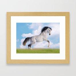Cavallo Framed Art Print