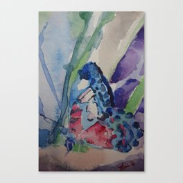 Butterfly 20 Canvas Print