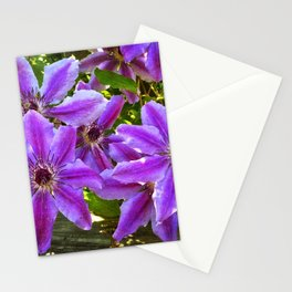 Clematis Nellie Moser Stationery Cards