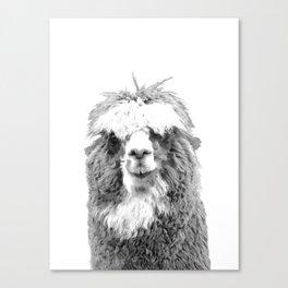 Black and White Alpaca Canvas Print