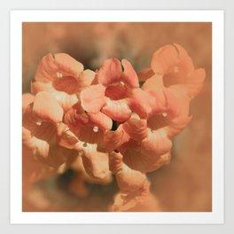 Softly Peach Art Print