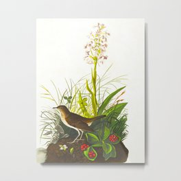 Tawny Thrush Bird Metal Print
