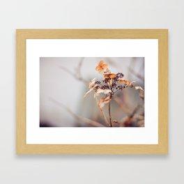 Winter Flowers Framed Art Print
