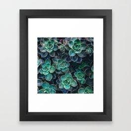 Succulent Blue Green Plants Framed Art Print