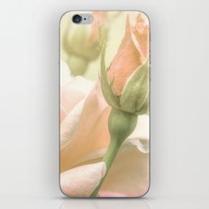 Gentle Roses iPhone & iPod Skin