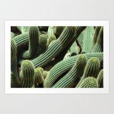 Organic Cactus Art Print