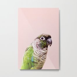 Parot Photography | Peek-a-boo | Tropical | Wildlife | Bird | Blush Pink Metal Print