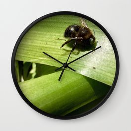 Carpenter bee Wall Clock