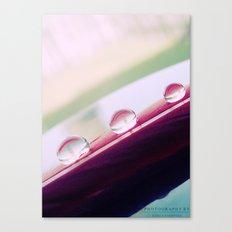Three Drops Canvas Print