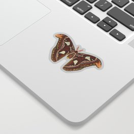 Atlas moth Sticker