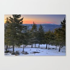 Winter sunset. Forests Canvas Print