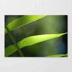 Light through the Leaves Canvas Print