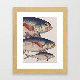 Fish Classic Designs 5 Framed Art Print