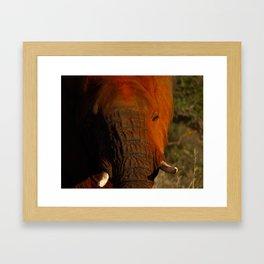 In the eye of the Elephant Framed Art Print