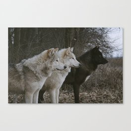Cana, Logan, and Luther Canvas Print
