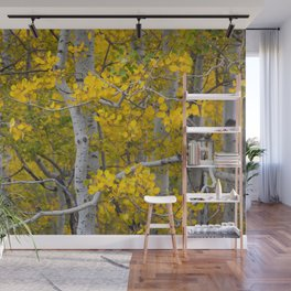 Birch Trees in the Autumn Wall Mural