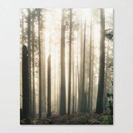 Sun Through Misty Trees Canvas Print