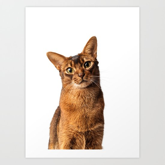 Abyssinian Eyes Art Print