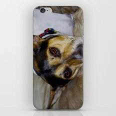 Terrier iPhone & iPod Skin