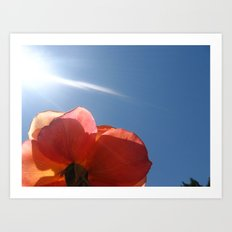 Translucent Rose III Art Print