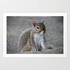 Squirrel Art Print
