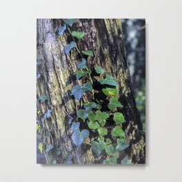Ivy - Nature Photography Metal Print