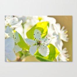 Floral 31 #flower Canvas Print