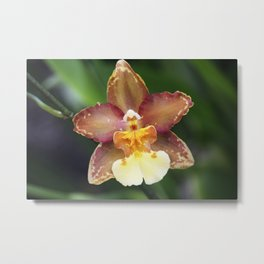 Longwood Gardens Orchid Extravaganza 73 Metal Print