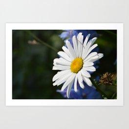 White Daisy Flower Loves Me Loves Me Not Art Print