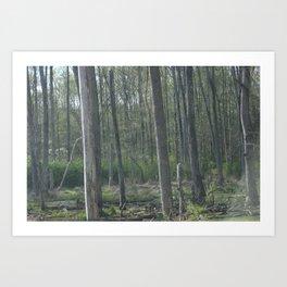 Swamps Art Print