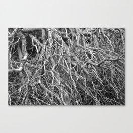 Pine Tree - M Canvas Print