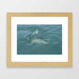 Alaskan Salmon on the line Framed Art Print