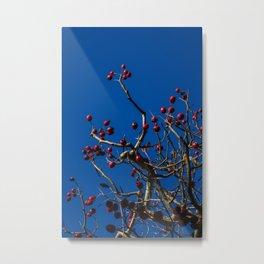 Winter Red Metal Print