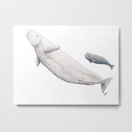 Beluga and baby beluga whale Metal Print
