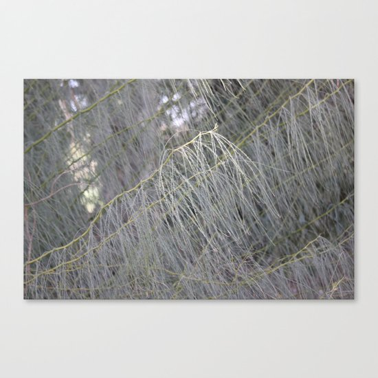 Spirit Of The Forest Canvas Print