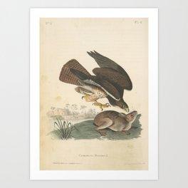 Vintage Print - Birds of America (1840) - Common Buzzard Art Print