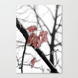 Scarlet Red Leaves in Winter Canvas Print