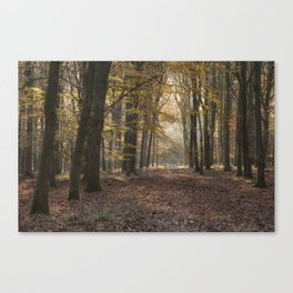 Towards the Sunlight Canvas Print